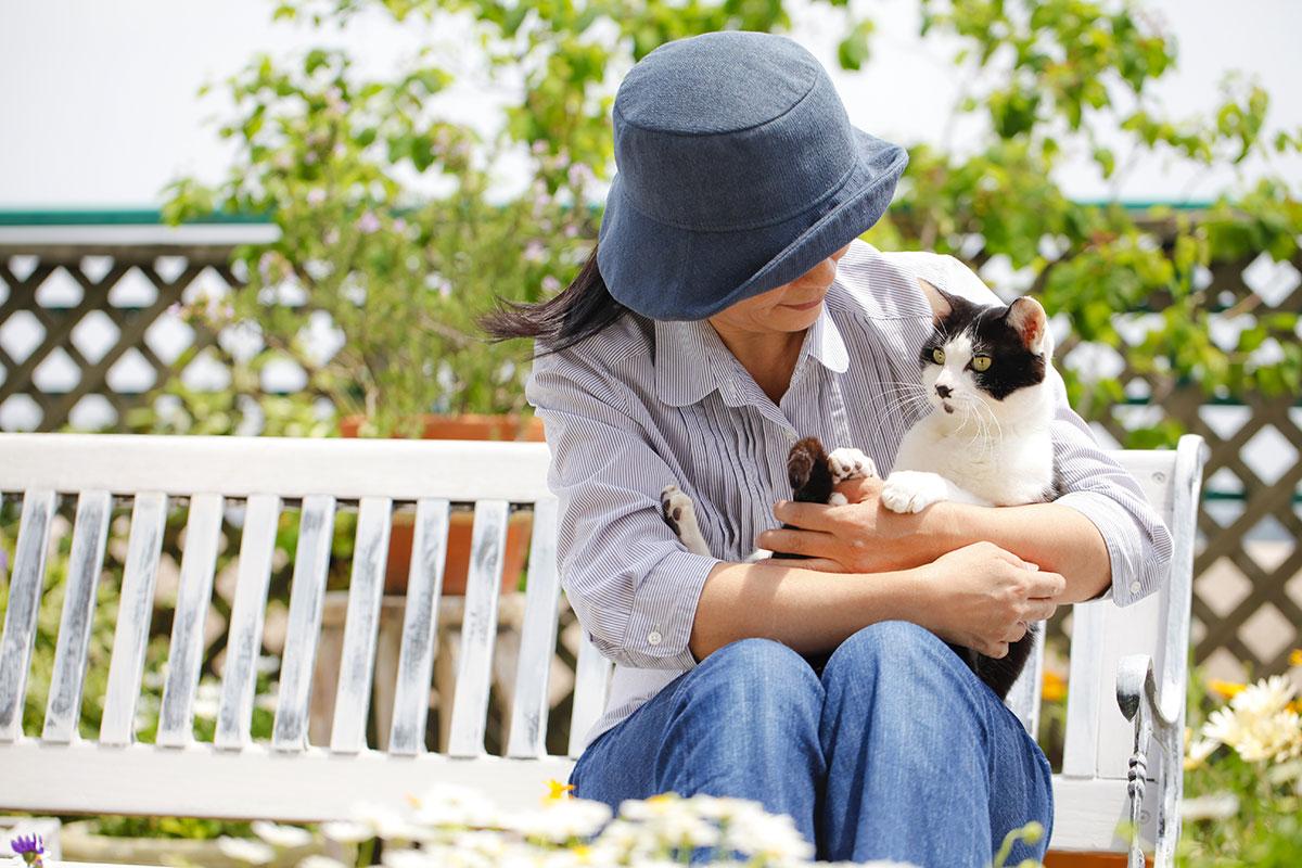 Los Gatos Y Las Bolas De Pelo
